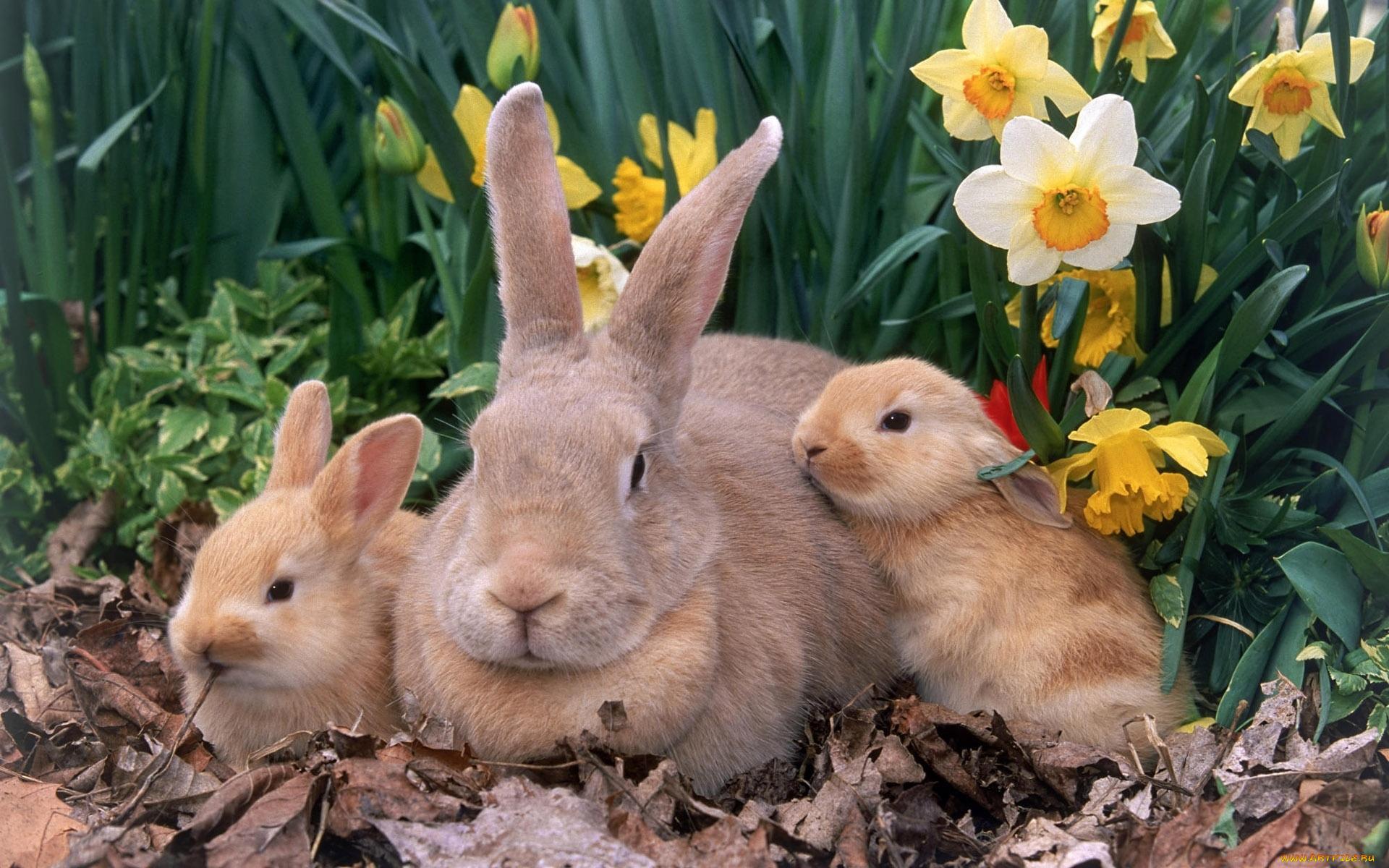 нужно фото с тремя зайцами шпиль левой